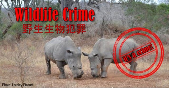 Wildlife Crime Photo